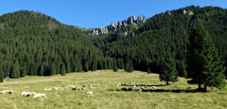 Urlop w Zakopanem – rozmaite atrakcje